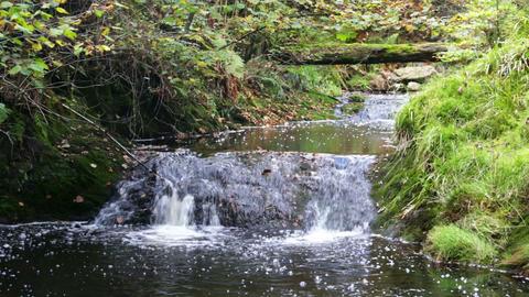 Mountain Creek Waterfall Footage