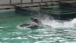 Performance in the dolphinarium with a dolphins Footage