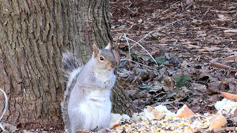 squirrel feeding, Live Action