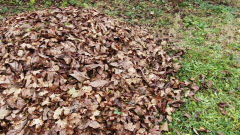 4 K Pile of Autumn Fall Leaves in Garden 2 pan Footage