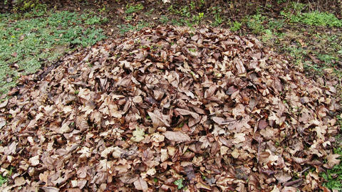 4 K Pile Of Autumn Fall Leaves In Garden 3 Tilt stock footage