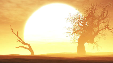 4 K Sunset Sunrise with Dried Trees in an Endless Animation