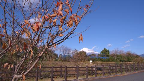 2160p (12bit RGB4:4:4) 秋 autumn Japan ライブ動画