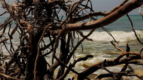 Dry dead snag on Sea Background Stock Video Footage