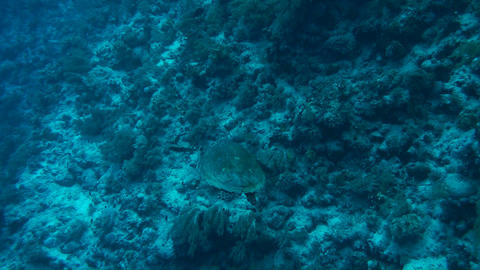 Sea turtle Stock Video Footage