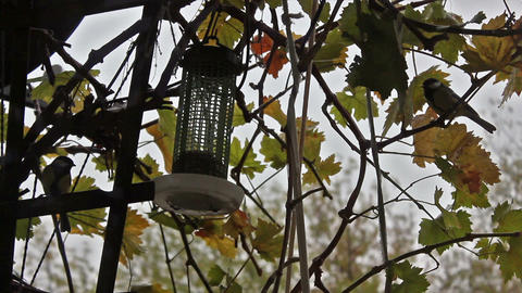 Bird Feeder Hanging On The Vine - Timelapse stock footage