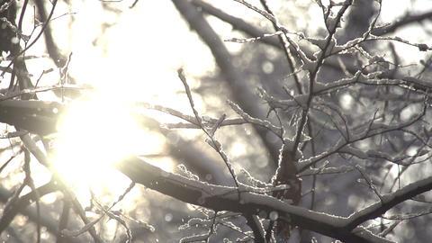 Floating Snowflakes Footage