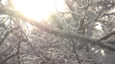 Snowflakes in the Sunlight Footage