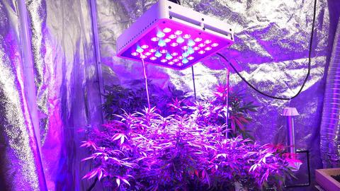 Room Shot Of Marijuana LED Light, Low Angle stock footage