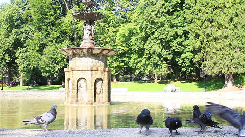 Pigeons on the Fountain in the City Park Footage