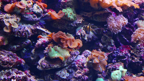 tropical fish and corals underwater Footage