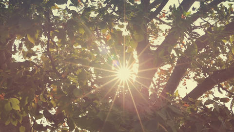 Branches in wind with glitter Sun flare Footage