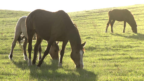Mares In Bright Sunlight stock footage