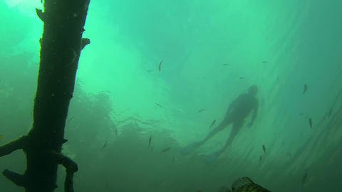 Low-angle backlight view of fish with snorkeler sw Footage