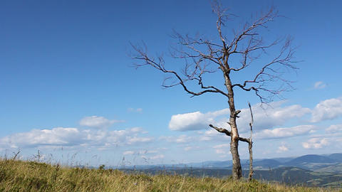 Dead tree Footage