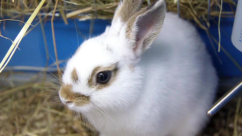 White Rabbit stock footage