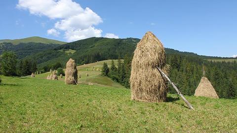 Summery Carpathians Footage