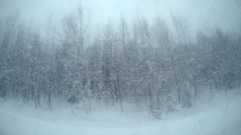 Travel In The Winter Woods Of Siberia stock footage