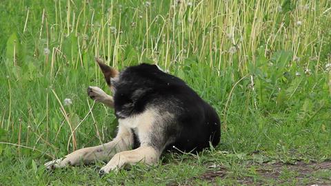Mongrel dog Footage