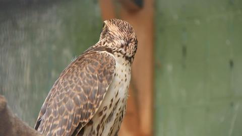 Falcon Live Action