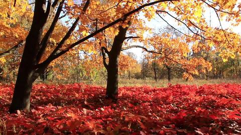 Amazing beautiful trees Footage