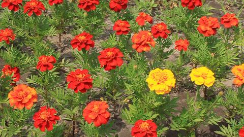 Flowerbed Footage