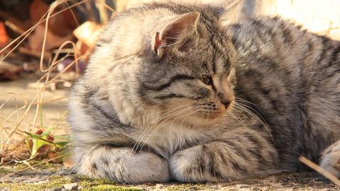 Sleepy kitten Footage