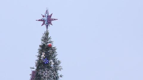 Christmas tree Live Action