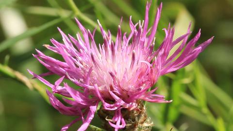 Wild flower Footage