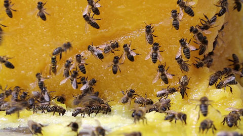 Bees and honey Footage