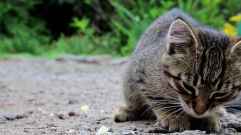 Little kitten eats bread Footage