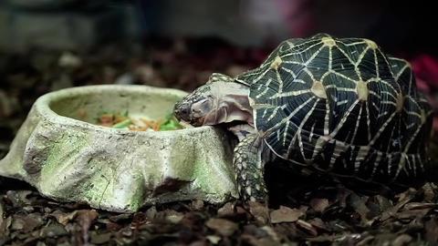 Turtle Eats stock footage