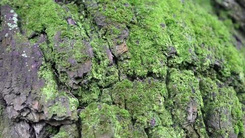 Green moss Footage