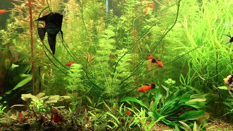 Aquarium fishes Footage