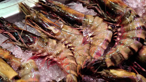 Lobsters and marine products lie on ice Footage