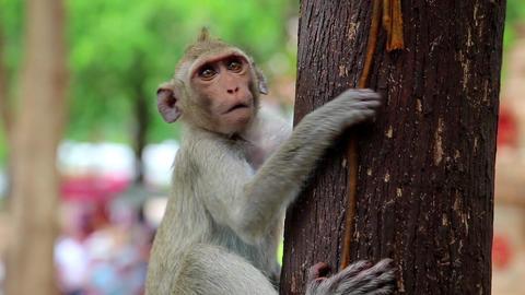 Monkey sitting on a tree Footage