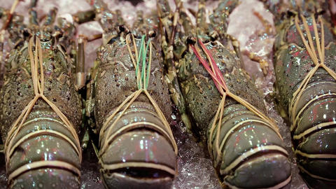 Lobsters lie on ice in restaurant Live Action