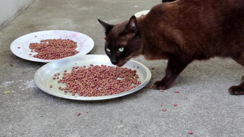 Black cat eats pet food Footage