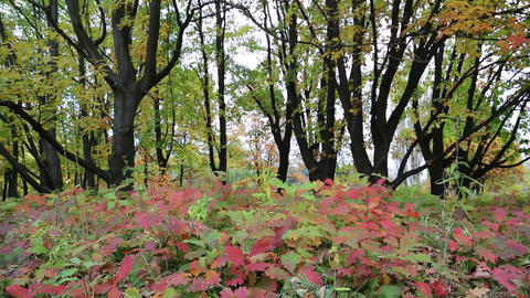 Beautiful Autumn In Forest stock footage