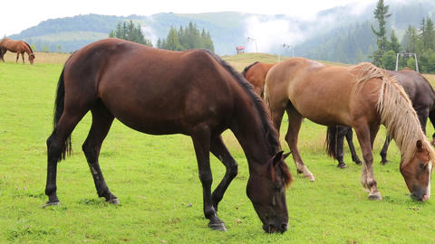 Horses on the grassland Footage