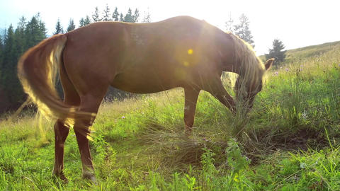 Beautiful horse on green meadow in mountains in sunlight Footage