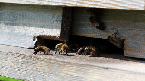 Swarm of bees near beehive Footage