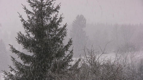 Snowing Footage