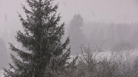 Snowing Stock Video Footage