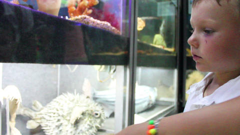 Boy looks Aquarium Stock Video Footage