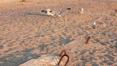 Gulls on the beach Stock Video Footage