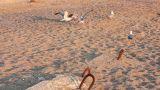 Gulls on the beach Footage