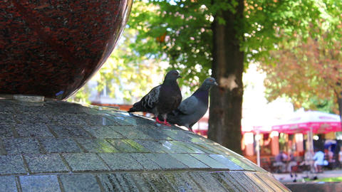 Pigeons in fountain 3 Stock Video Footage