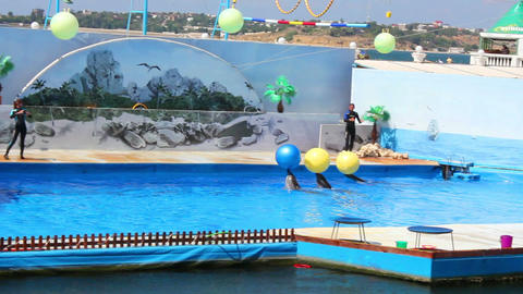 Dolphins in the Dolphinarium 8 Stock Video Footage