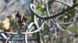 Walnut Tree In Autumn 3 stock footage